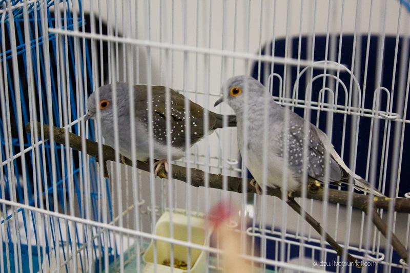 Фоторепортаж с выставки ЗооПалитра 01 октября 2011