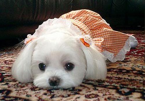 Домашние животные в Омске: инструкция по выживанию