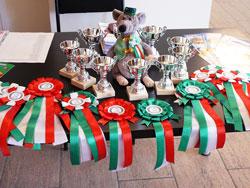 В Национальном музее РТ открылась выставка декоративных крыс