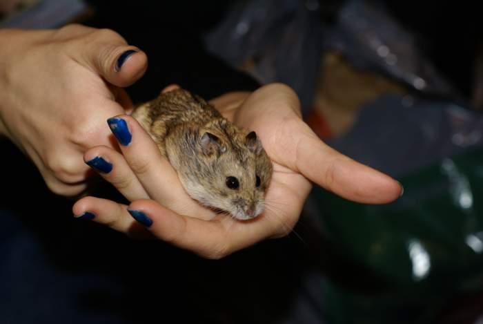 Фоторепортаж Ольги Кувыкиной с выставки ЗооПалитра 01 октября 2011