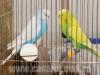 Секция птиц осенней ЗооПалитры 2013