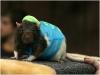 20.03.2010 г. Конкурс костюмов для крыс. Фото: Инга Сборщикова