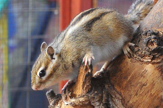 В Амбер Плазе пройдет крупнейшая выставка мелких домашних животных «ЗооПалитра»