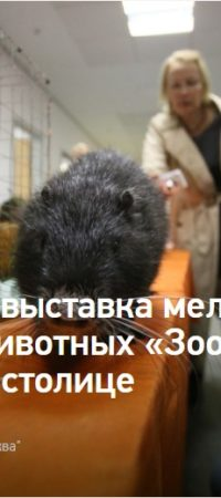 Крупнейшая выставка мелких домашних животных «ЗооПалитра» состоялась в столице
