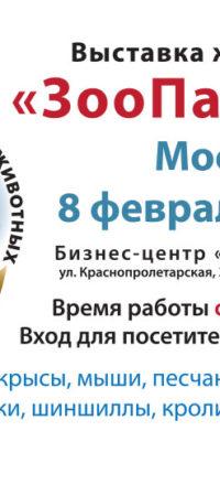 Рекламные листовки выставки: февраль 2020