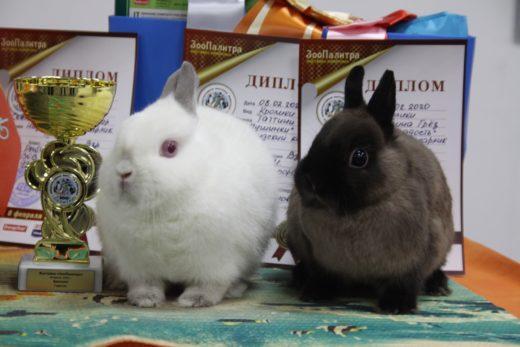 ЗооПалитра - Экспертиза кроликов