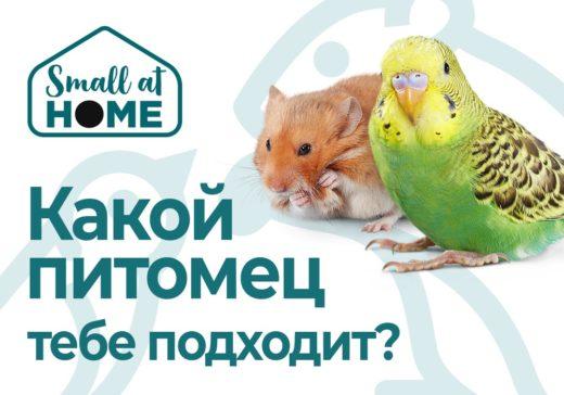 Портал «Small at Home» для владельцев и любителей маленьких домашних питомцев – интересные и полезные статьи о грызунах, кроликах и птицах, советы по уходу и содержанию, полезные контакты ветеринаров и заводчиков, обзоры зоотоваров.